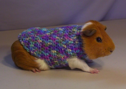 Matey in his new Spring Sweater